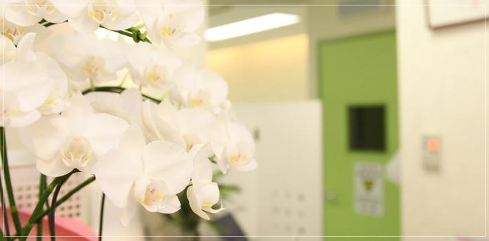 白金高輪 歯医者|姫歯科室 院内紹介